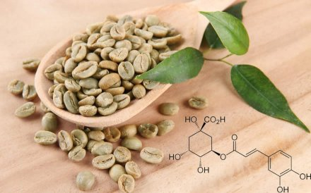 processo di assunzione del caffè di montagna verde
