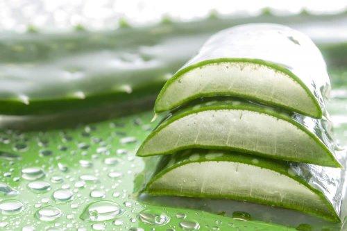 lassunzione di aloe aiuta a perdere peso
