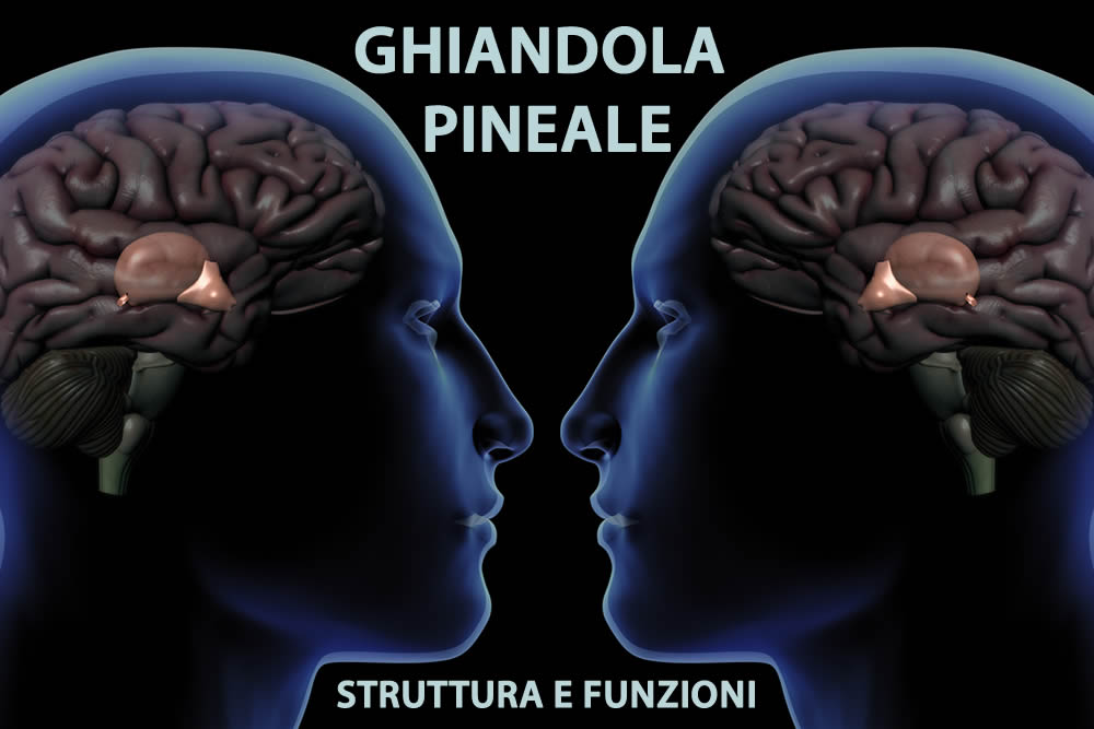 Ghiandola Pineale